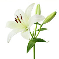 Santeiu Funeral Home Garden City Michigan Mi   Garden City Funeral Home
